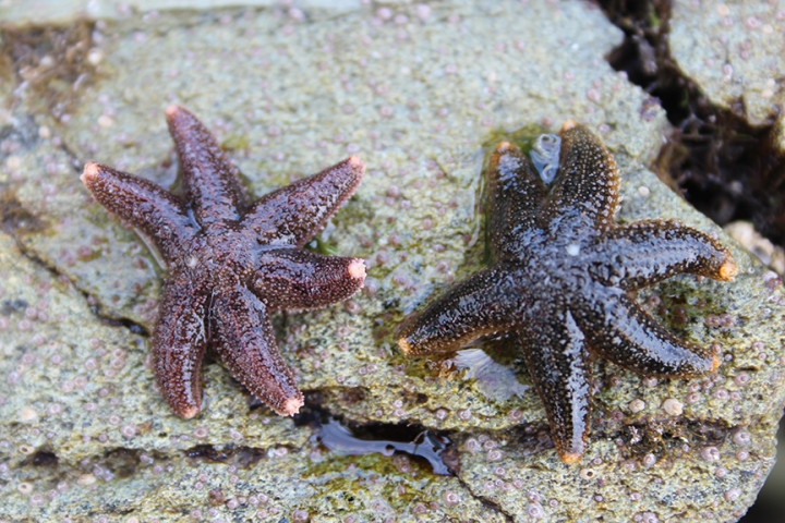 Some baby starfish